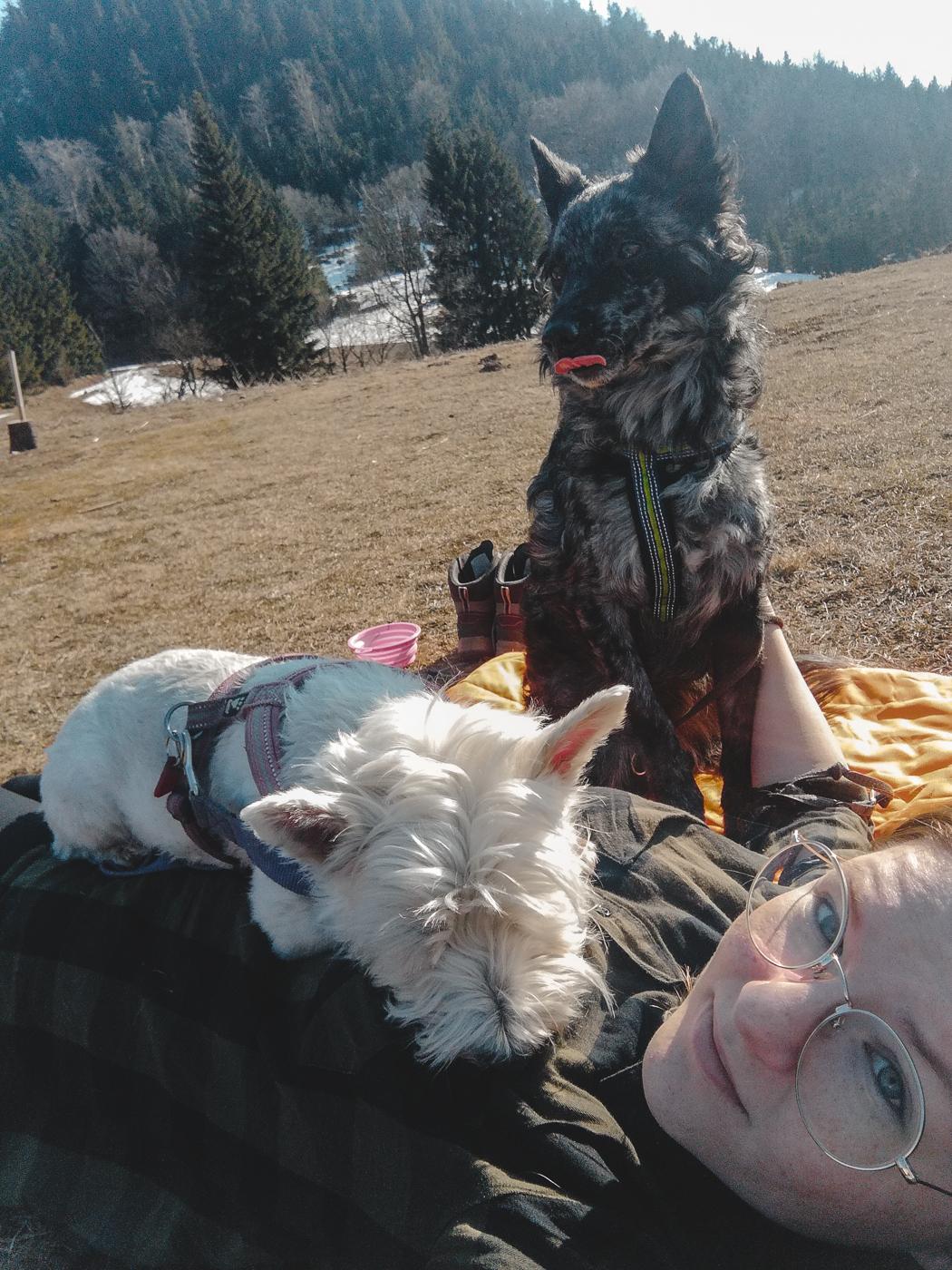 chillout naszlaku - topodstawowa umiejętność psa wgórach