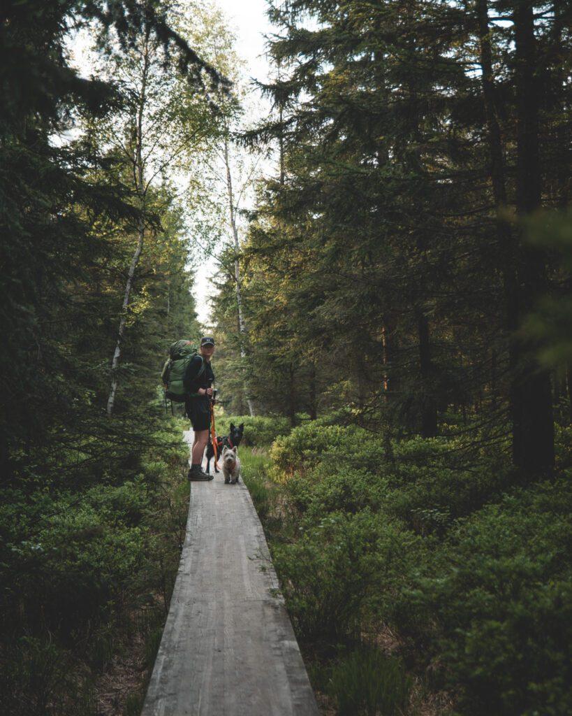 Najpiękniejszy szlak w Górach Stołowych wiedzie drewnianą kładką ponad podmokłymi łąkami.