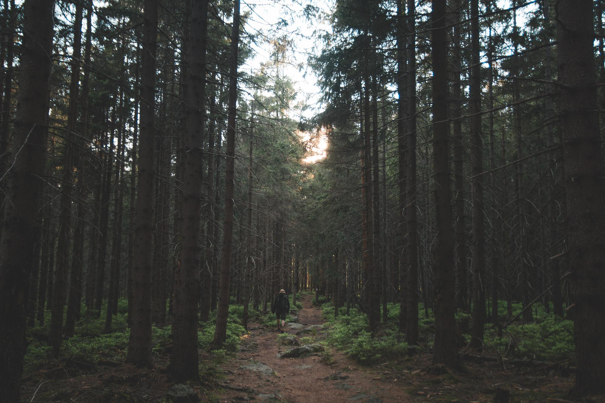 Płaski las w Górach Stołowych. Najpiękniejszy!