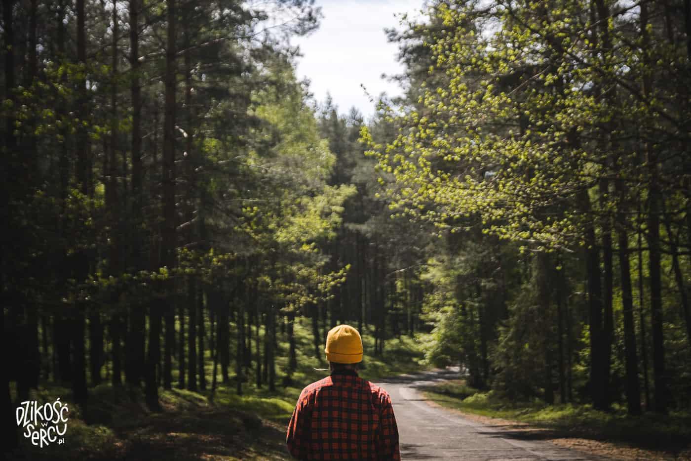 Mężczyzna wędrujący po lesie