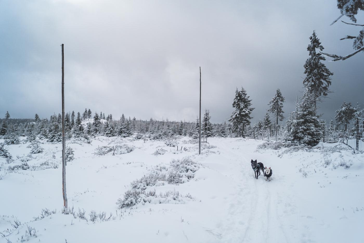 Zimowy szlak w górach. Drzewa i ziemia pokryte grubą warstwą śniegu. Ciemne niebo zwiastujące złą pogodę. Na szlaku stoją Fibi i Krakers.