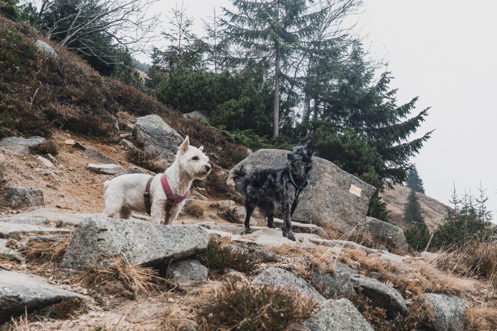 Karkonosze z psem, szlaki w Karkonoszach, dolnośląskie