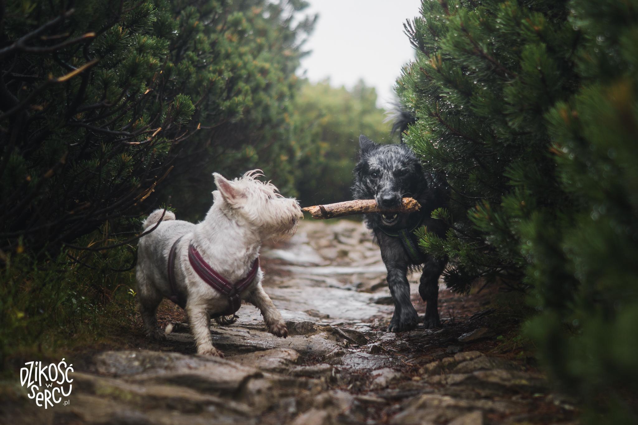 Smycz na górskie wycieczki z psem.