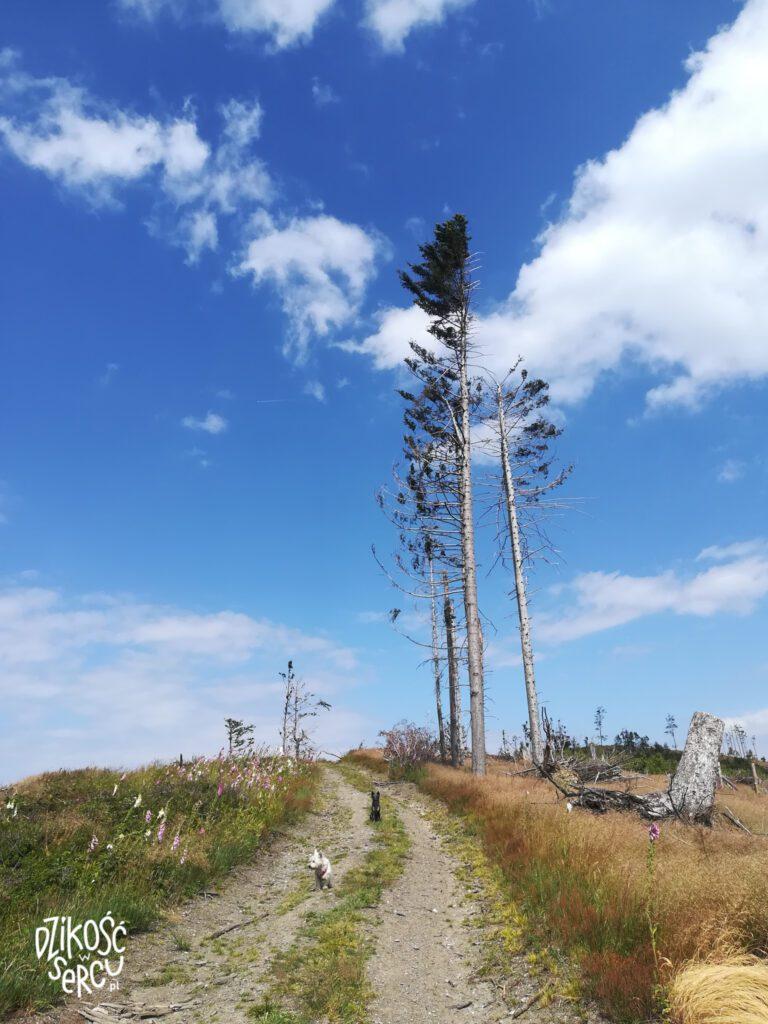 Góry Opawskie, Srebrna Kopa