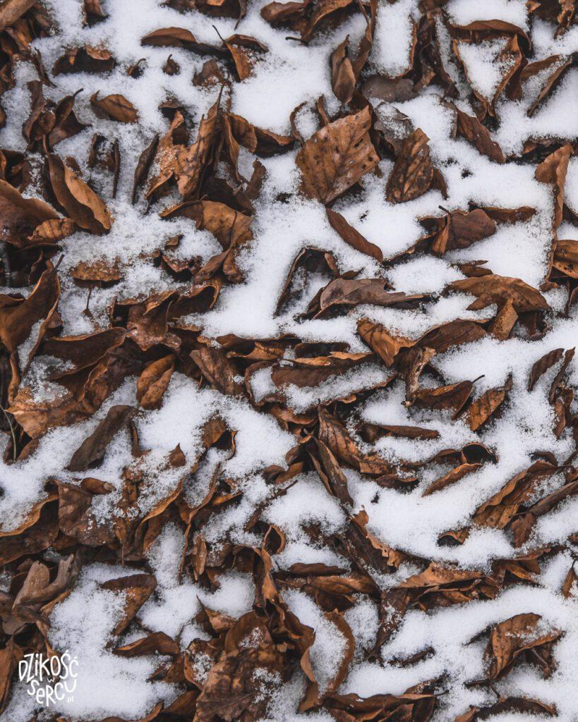 Walka jesieni zzimą :) Szlak naOřešník, Góry Izerskie