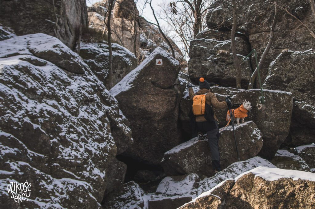 Oresnik, Orzesznik, Góry Izerskie z psami w Czechach