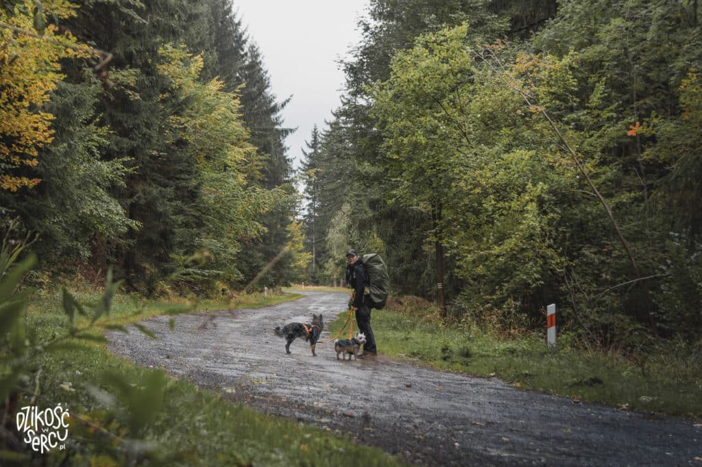 Magda, Fibi i Krakers podczas samotnej wędrówki z psami po Ziemi Kłodzkiej