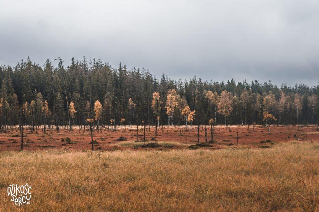 Torfowisko pod Zieleńcem, rezerwat przyrody jesienią