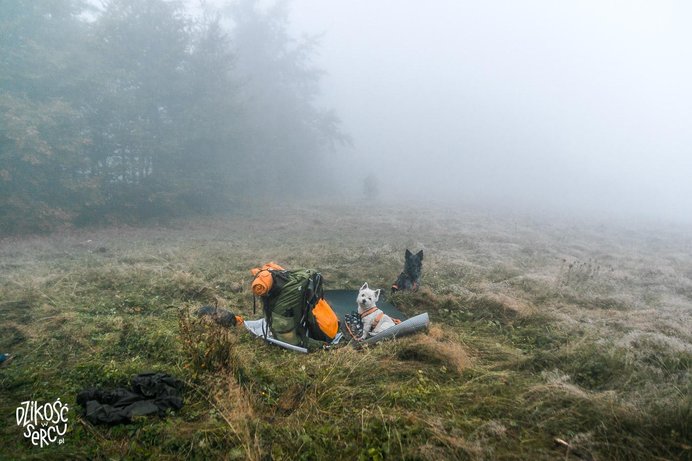 Pakowanie plecaka po nocy pod namiotem, we mgle, z dwoma psami