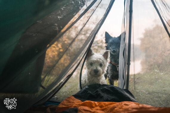 Namiot z psem, nocleg pod namiotem z psem